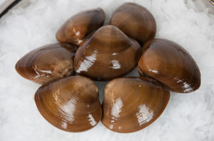 Chocolate-Clams-2